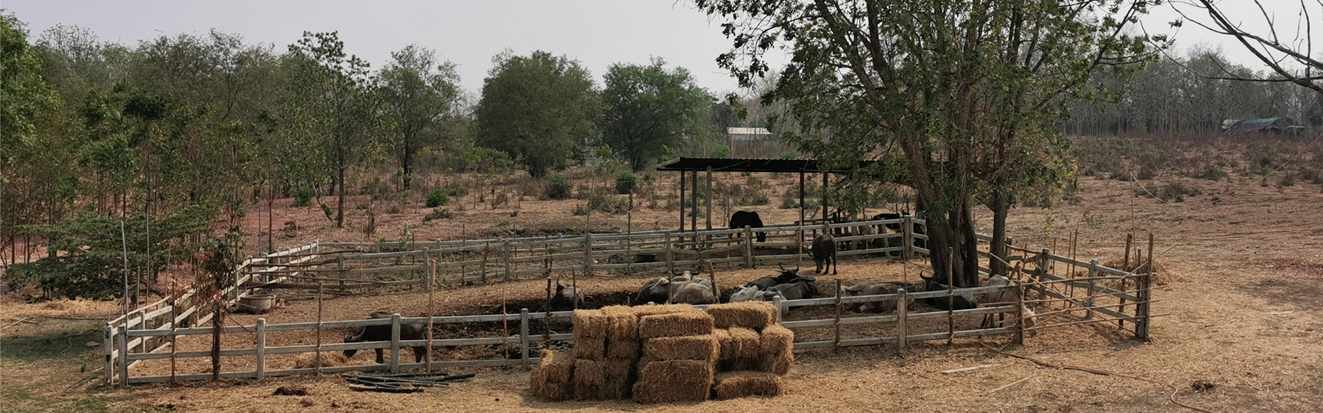 La ferme familiale de Tarn où sont cultivées les plantes utilisées dans les produits Cher-aim.